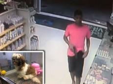 Trio assalta pet shop e rouba filhote avaliado em R$2.500 em Teresina