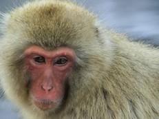 Zoológico mata 57 macacos com