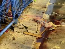 Em estado grave, vítima do acidente na Sapucaí respira por aparelhos
