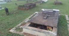 Cadela da à luz a 11 filhotes dentro de túmulo em cemitério de Brasília