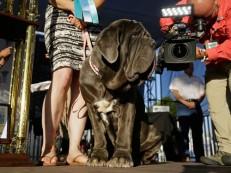 Cachorrinha Martha é eleita ´a mais feia do mundo´ em concurso nos EUA
