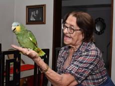 STJ decide se papagaio Leozinho poderá morar com sua dona na Paraíba