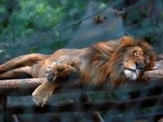 Polícia acredita que ladrões roubaram animais de zoológico para comê-los