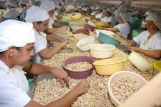 Exportações de castanhas de caju no Ceará sofrem retração em setembro