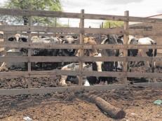 Mais de 50 matadouros estão interditados no Ceará