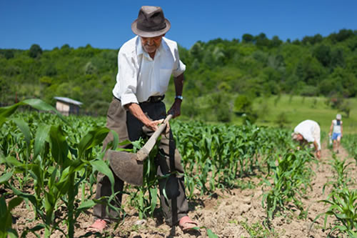 Resultado de imagem para BNB regulariza R$ 1,7 bi em dívidas com produtores rurais