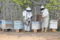 Produtores cearenses querem mel de abelha na merenda escolar