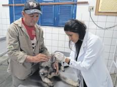 Leishmaniose em humanos já contabilizou 116 casos no Ceará