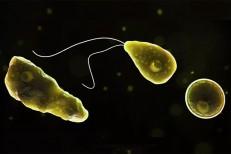 Ameba 'comedora de cérebro' já matou quase 200 pessoas no mundo