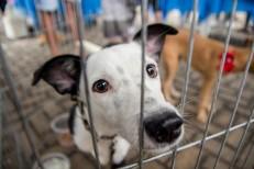 Prefeitura de Juazeiro investiga morte de cem cachorros desovados próximo ao Centro de Zoonoses