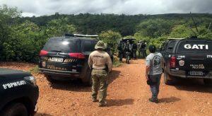 PF destrói 57 mil pés de maconha no Sertão de Pernambuco na Operação Muçambê II