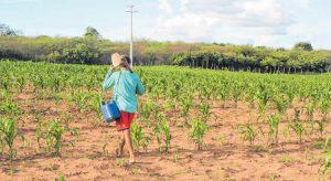 Chuvas ficam abaixo da média para 14% das cidades cearenses