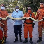Bombeiros resgatam cobra Python de 3 metros que estava presa no telhado de uma casa