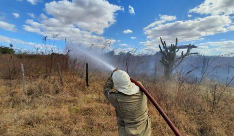 Incêndios em vegetação nos primeiros 10 dias de agosto já superam todo mês de julho, no Ceará