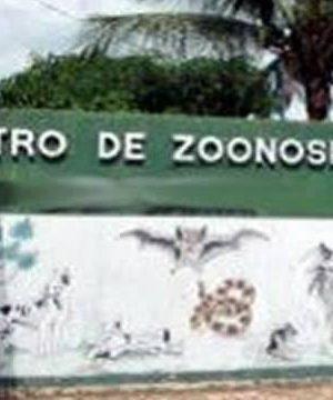 Cão é sacrificado no Centro de Zoonoses de Crato, mesmo sem doença