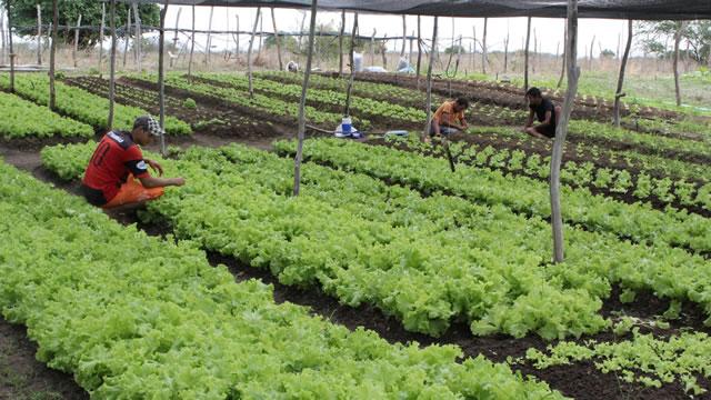 Programa de Aquisição de Alimentos atende a 1600 agricultores familiares no Ceará