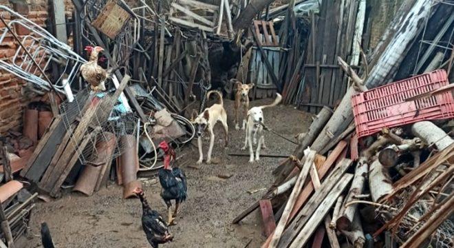 PM resgata cães acorrentados sofrendo maus-tratos e prende aposentado, em Icó