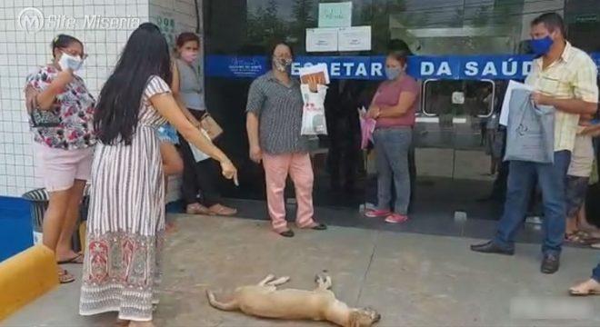 Vereadora deixa cão morto na entrada da Secretaria da Saúde de Juazeiro do Norte