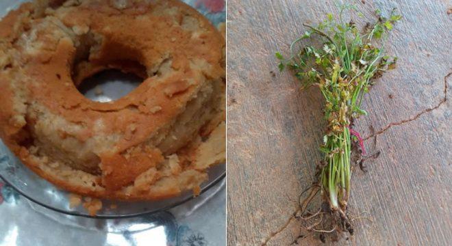 Alunos de Granjeiro recebem kits de merenda escolar com alimentos danificados