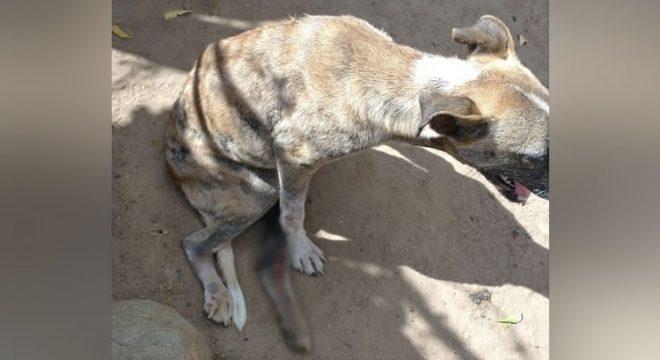 Vendedor atropela em Assaré cadela de mulher que lhe devia dinheiro da cesta básica