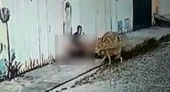 Caso de zoofilia em Maracanaú, na Grande Fortaleza, é investigado pela Polícia