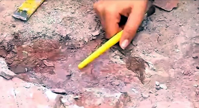 Fóssil de 'tubarão' de 150 milhões de anos é encontrado em Missão Velha